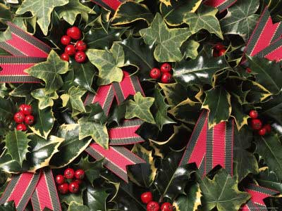 Holly, Ivy & Tartan Ribbon