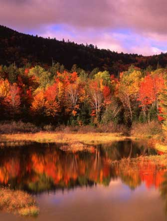 Small Pond and Fall Foliage Reflection, Katahdin Region, Maine, USA